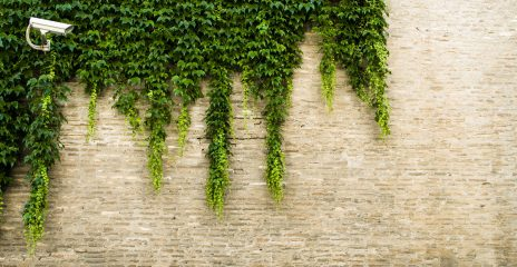 A security camera is mounted on a brick wall, ivy hangs down the wall.